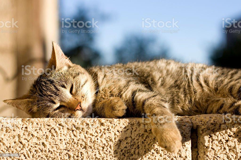 Katze und Schlafen – Foto