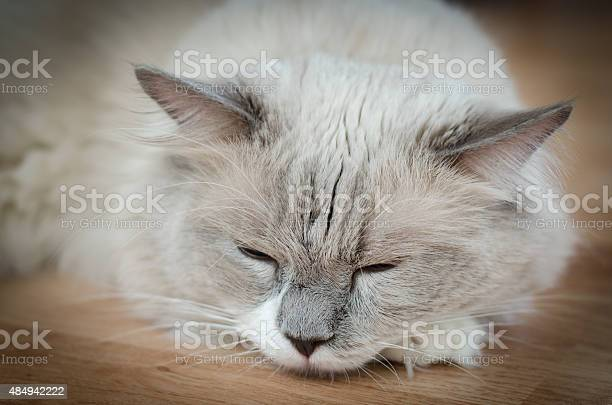 Cat sleeping picture id484942222?b=1&k=6&m=484942222&s=612x612&h=a4kbavbikpb0qqr6jcapwlgypvg dldwy71m5hct2j4=