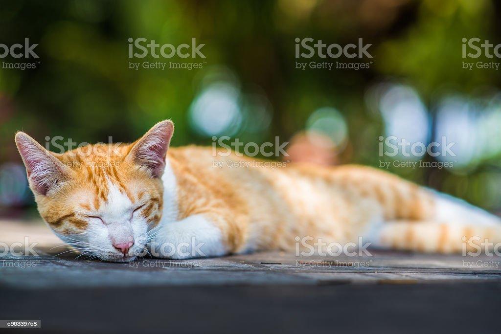Cat Sleeping royalty-free stock photo
