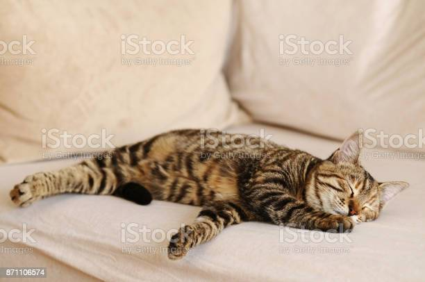 Cat sleeping picture id871106574?b=1&k=6&m=871106574&s=612x612&h=kjztdkhop6ydq85yekzy3fg997ttwafjr8zzlxnaj9w=