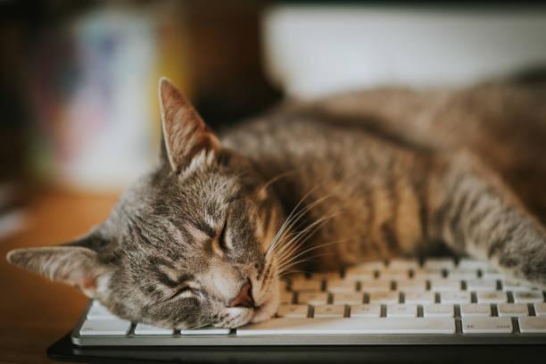 Cat sleeping resting on computer keyboard picture id1065348372?b=1&k=6&m=1065348372&s=612x612&w=0&h=7ngmfrgswxguszqusybcz8yxbuv3hjij2nnxwnbnui8=