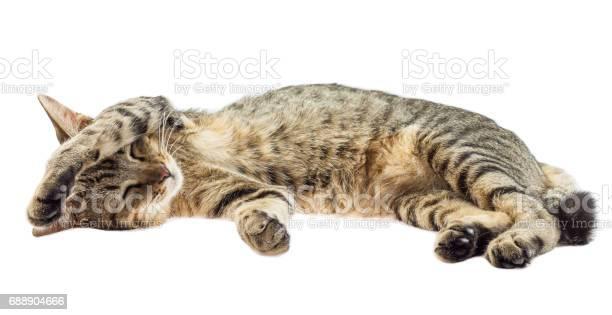 Cat sleeps isolated on white background picture id688904666?b=1&k=6&m=688904666&s=612x612&h=vpqphqdlinz9vbgy30nlgmrebhtdz7jrlz6mzrtz1u8=