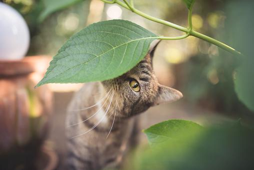 Cat smelling leaf