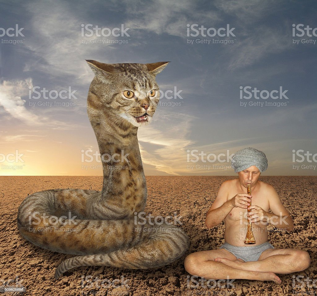 Cat snake and  fakir stock photo