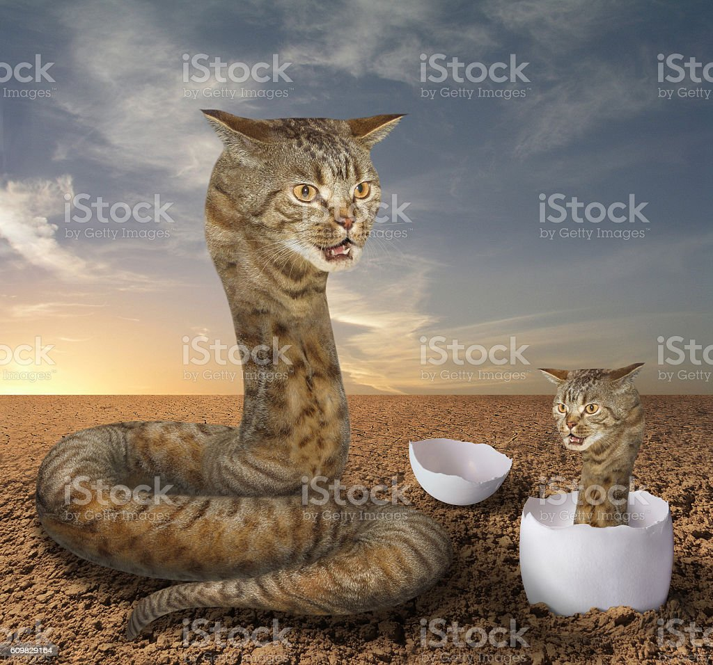 Cat snake and its cub stock photo