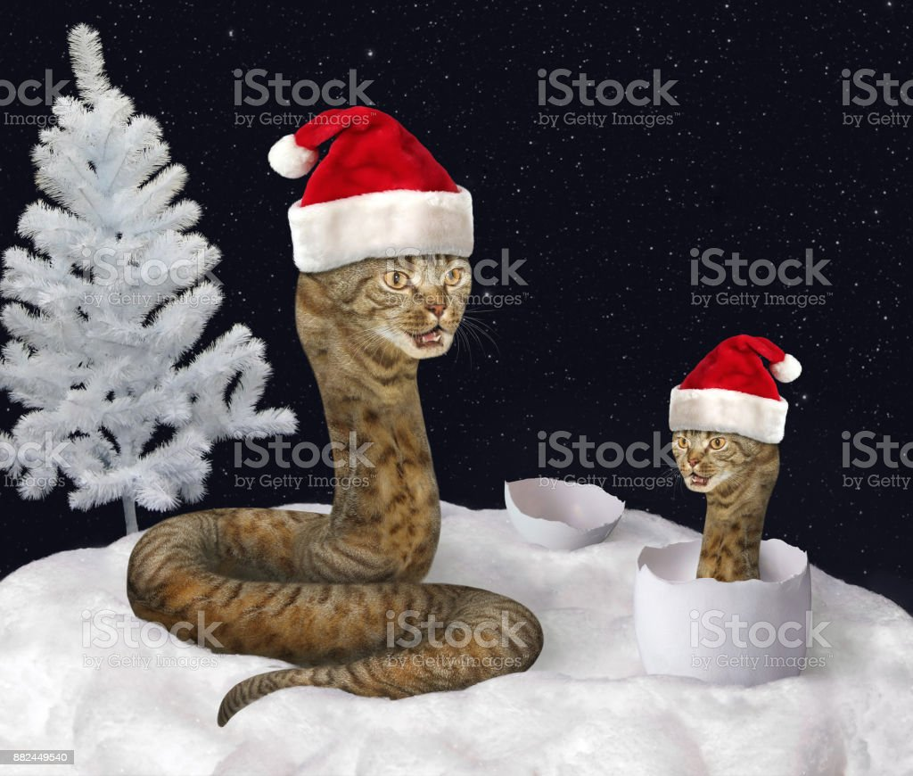 Cat snake and New Year