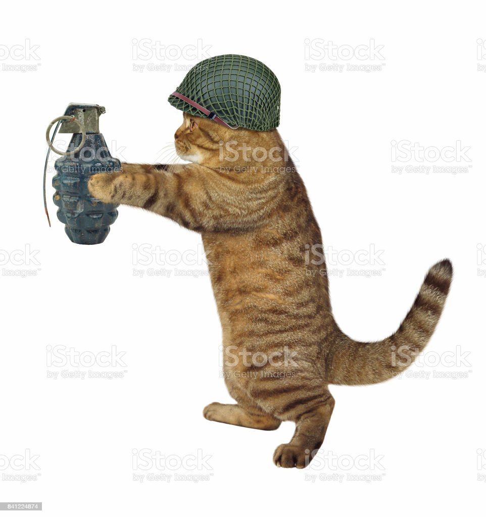 Cat soldier with grenade stock photo