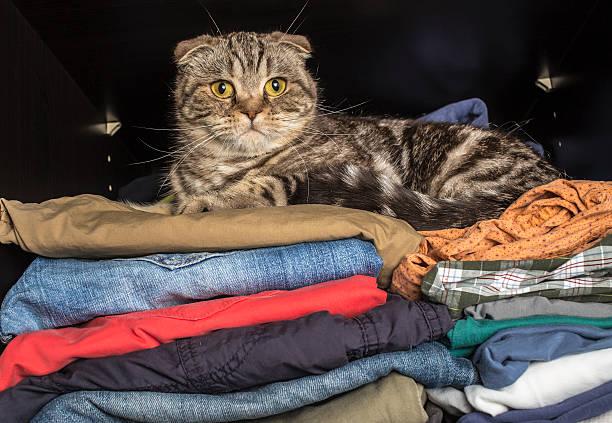 katze das essen zum mitnehmen auf kleidung in die garderobe - katzenschrank stock-fotos und bilder