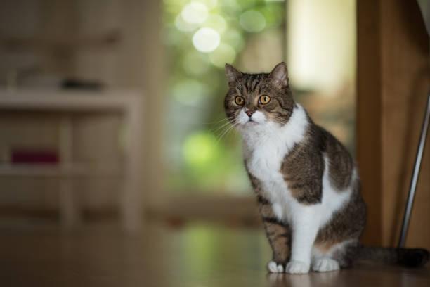 Cat standing in living room picture id1019048894?b=1&k=6&m=1019048894&s=612x612&w=0&h=rraylzedirxwh7bhrx2sageca jm2net841d2suet0a=