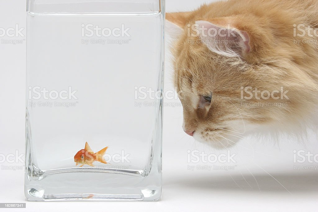 Cat Stare stock photo