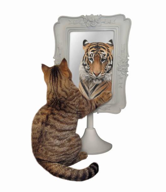 Mirror cat lion Cat Vs