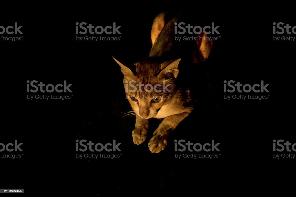 Gatto stares foto stock royalty-free