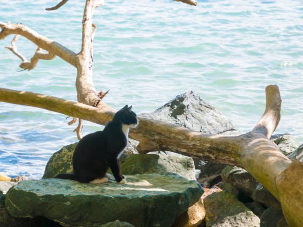 Cat staring at something a black and white cat turned to look at picture id1096647288?b=1&k=6&m=1096647288&s=612x612&w=0&h=11m65hju6nsejtsqhdat2mnbsp1ayzdzqbqd4y1i5du=