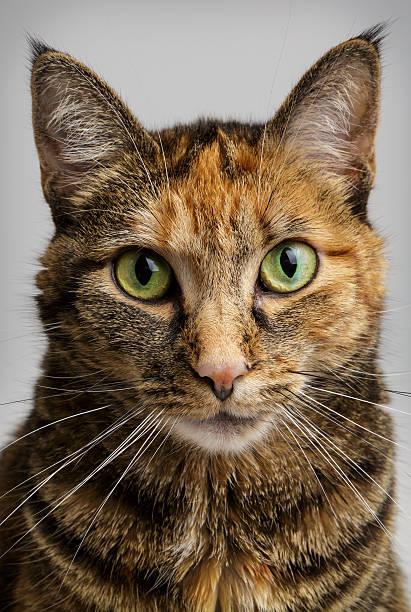 Cat staring intensely picture id497516245?b=1&k=6&m=497516245&s=612x612&w=0&h=z1m0ffxqryfuqf4jdsghxmfkddyf6upoenhgrjimkha=
