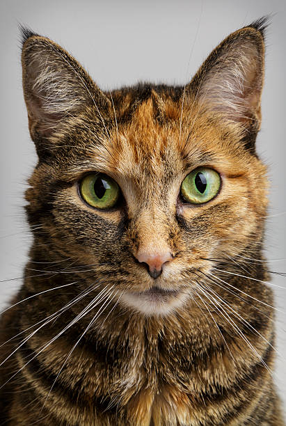 Cat Staring Intensely stock photo