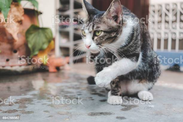 Cat staring on the concrete floor picture id694288582?b=1&k=6&m=694288582&s=612x612&h=p5g4pimtd0xblyj zdsu0d3xkhmsxco8tu3qa9ihsoe=