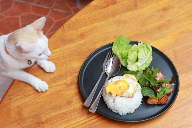 Cat staring to eat breakfast in the black round plate on the wooden picture id1217332552?b=1&k=6&m=1217332552&s=612x612&w=0&h=kcreeub9h0 klz1jwbxmk7ceqcwshsvko2ksqeijjyy=