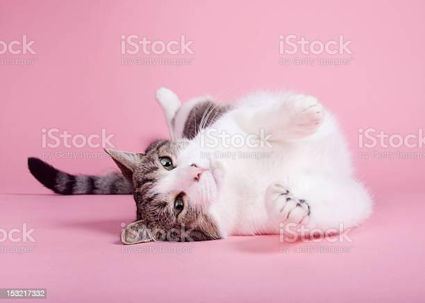 Cat stretching on pink background picture id153217332?b=1&k=6&m=153217332&s=612x612&h=adobqqwt rilltyr djqgak5ui4ou9lwjk7 cvdntxw=