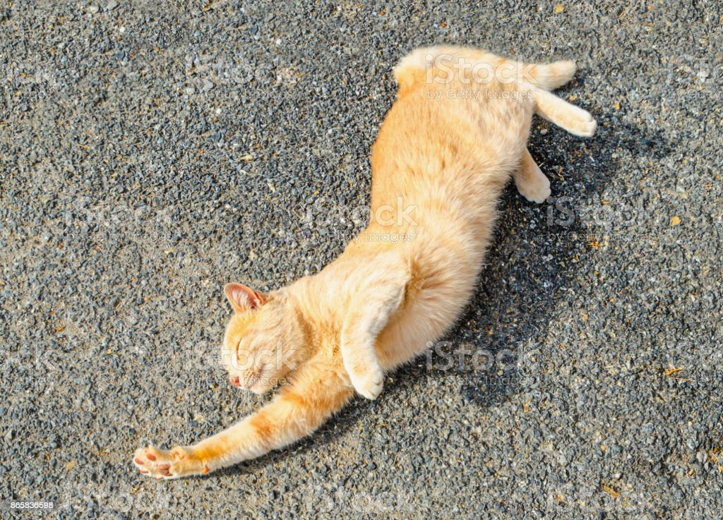 cat stretching on the ground of the street stock photo