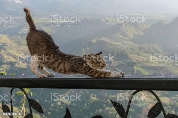 Cat stretching picture id1068770614?b=1&k=6&m=1068770614&s=612x612&h=kxjcmeq9oacmbwgirhouogyab4z3m bbgsf4ogvv5rq=