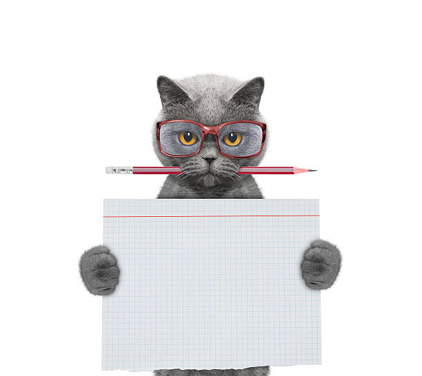 Cat studend at school holding piece of paper stock photo