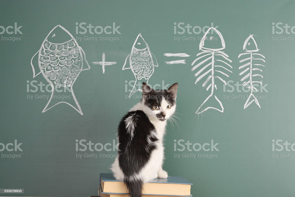 Cat studying arithmetic stock photo