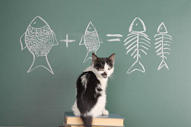 Selbst wer möchte Katze – Foto