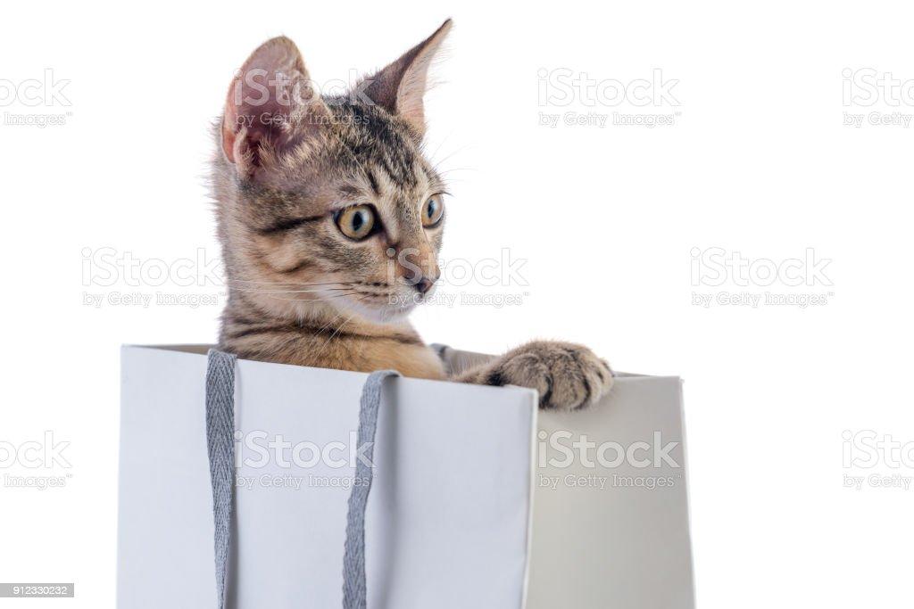 Katze Überraschung – Foto