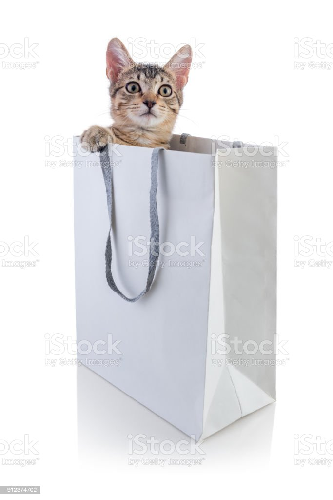 Young cat playing with a gift bag.