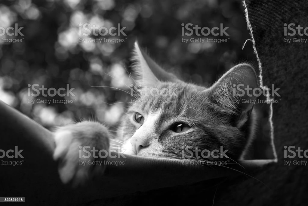 Cat takes nap on the marquee stock photo