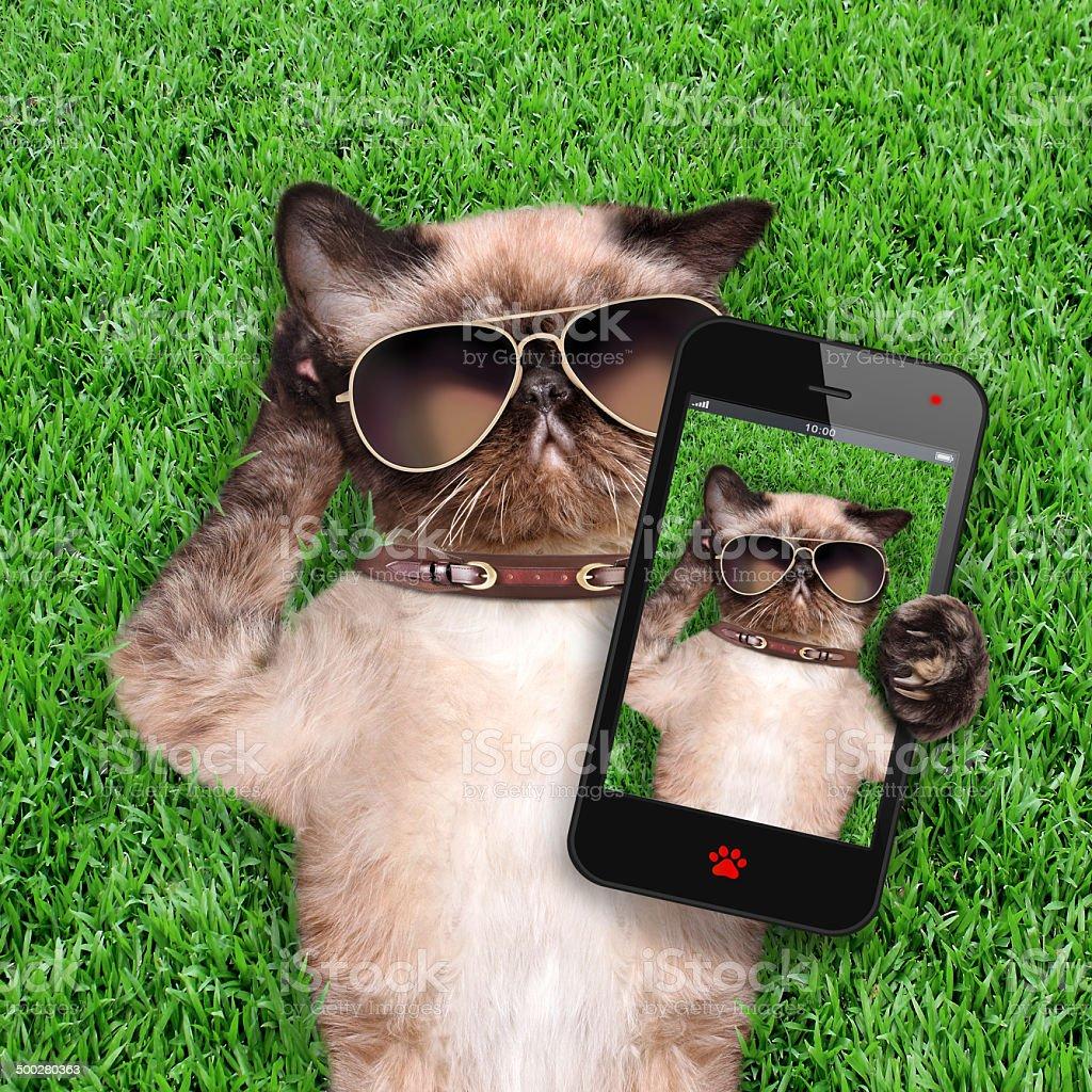 Cat taking a selfie stock photo