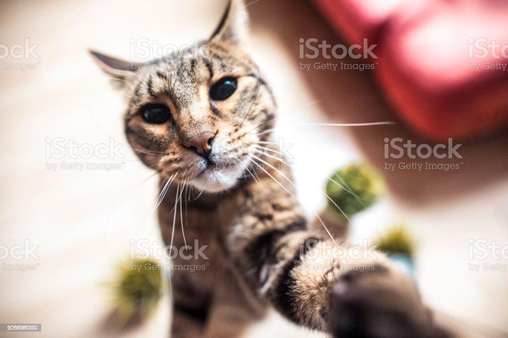 Katze nimmt eine selfie – Foto