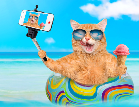 Cat  taking a selfie together with a smartphone.