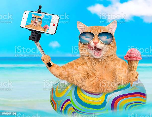 Cat taking a selfie together with a smartphone picture id576907136?b=1&k=6&m=576907136&s=612x612&h=uqameppdqtlk8ogkmacthmud27rxxuacqlocztja3lc=