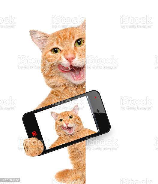 Cat taking a selfie with a smartphone picture id477753188?b=1&k=6&m=477753188&s=612x612&h=yaqj3mtmwghroudbjklaiakpqyqz8ntfgyjw6fhqfo0=
