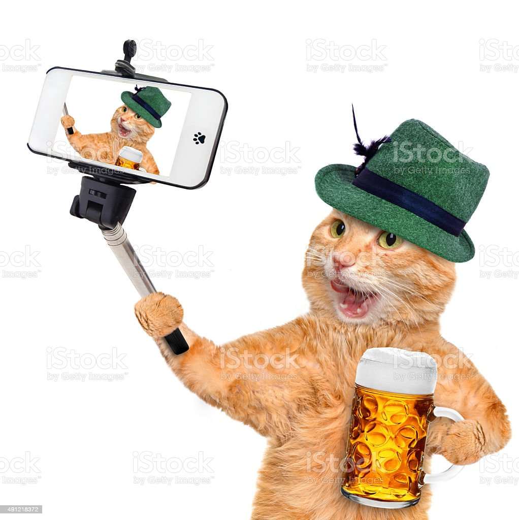 Cat taking a selfie with a smartphone stock photo