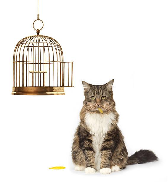 chat qui avons mangé le canari - canari photos et images de collection