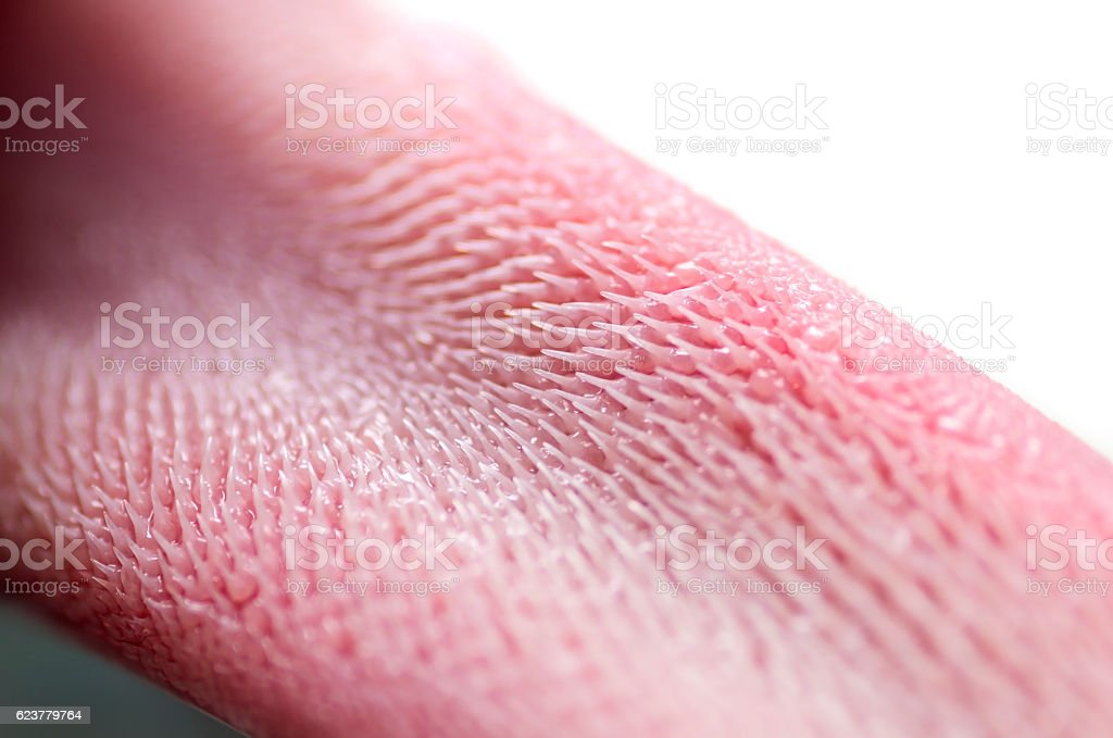 Cat Tongue Macro Closeup Stock Photo & More Pictures of Animal | iStock