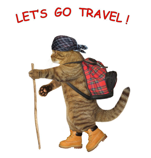 Cat tourist with a rucksack 2 stock photo