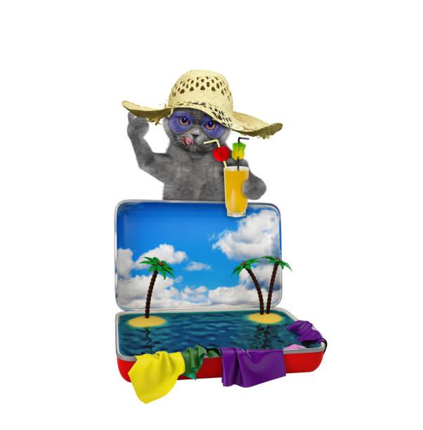 Cat tourist with juice and red suitcase picture id670491100?b=1&k=6&m=670491100&s=612x612&w=0&h=x0rb zyryhbawplhr0xolutr8yo8ftwet0bi arc4um=