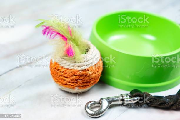 Cat toy bowls and leashes with copy space picture id1177349562?b=1&k=6&m=1177349562&s=612x612&h=  3gdivrdq6qdysjnc82n9wrszxsbtnxf3euulegumy=