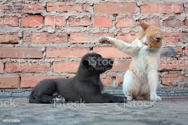 Cat training a dog picture id451410939?b=1&k=6&m=451410939&s=612x612&h=oimlsdld xkti pes80c8vm5bbag5rhghjk ij71nwi=