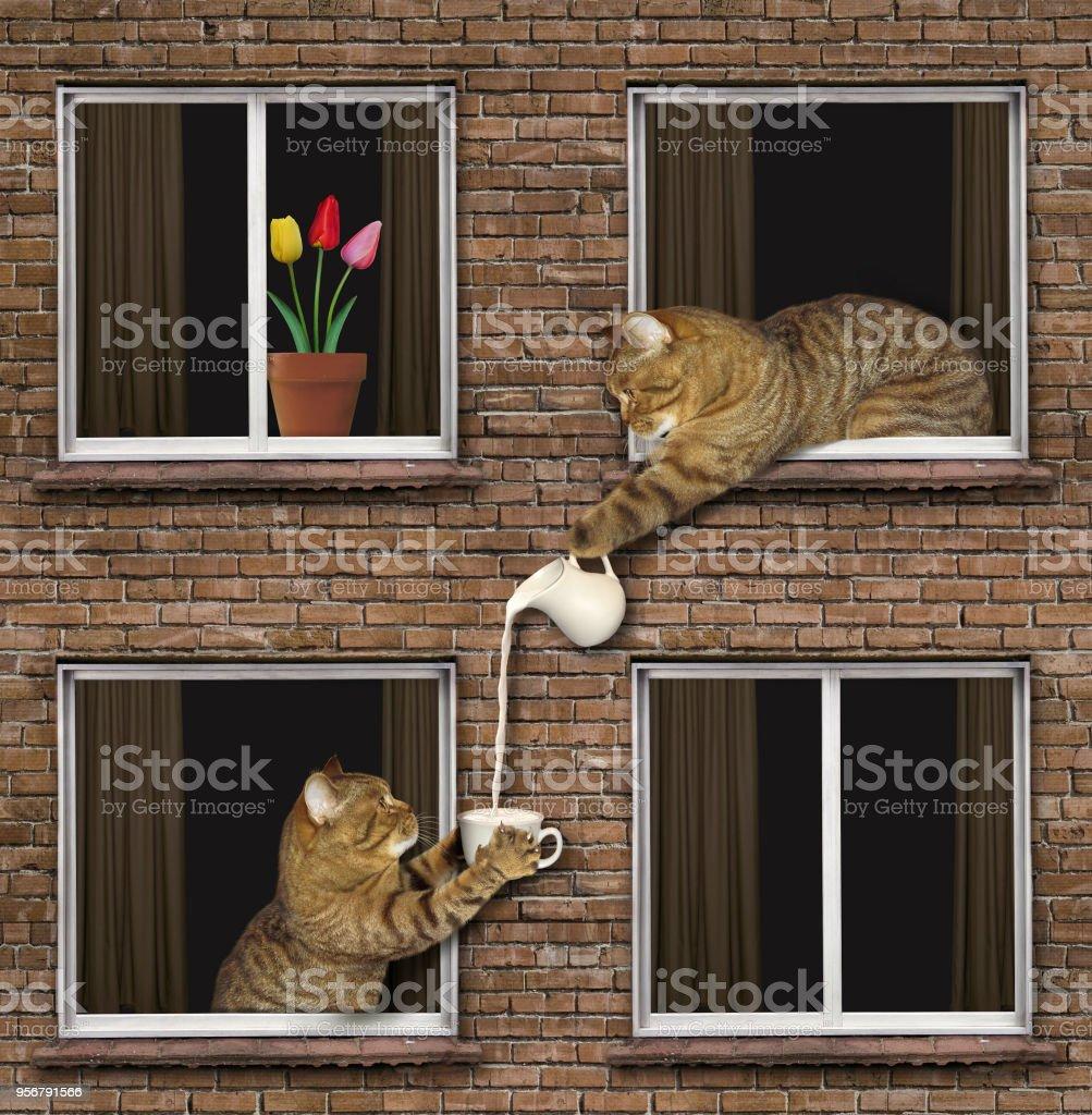 Cat treats neighbor with milk stock photo