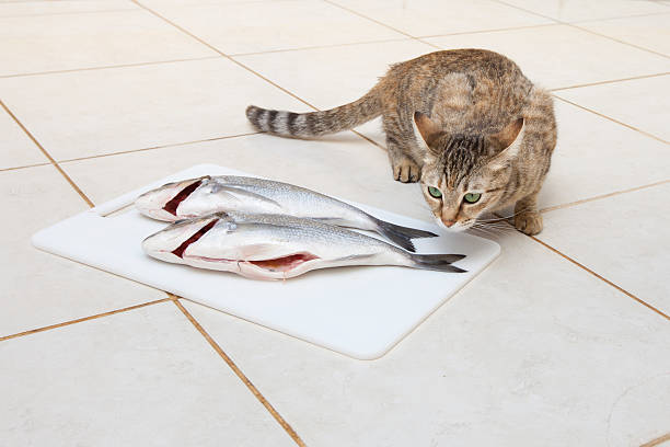 Cat trying to catch a fish stock photo