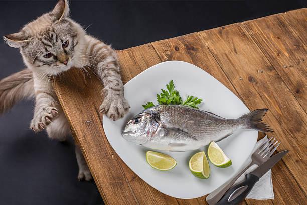 Katze versuchen, ein Fisch aus der stehlen Abendessen – Foto