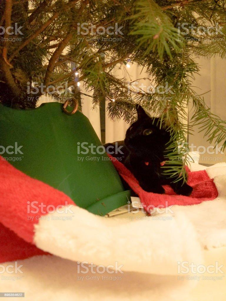 Cat under a Christmas tree stock photo