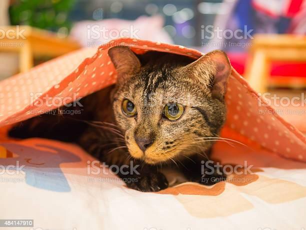 Cat under blanket picture id484147910?b=1&k=6&m=484147910&s=612x612&h=l0 fy49h9ag0bonmrmhgwa5zbope vle9qavmdnosus=