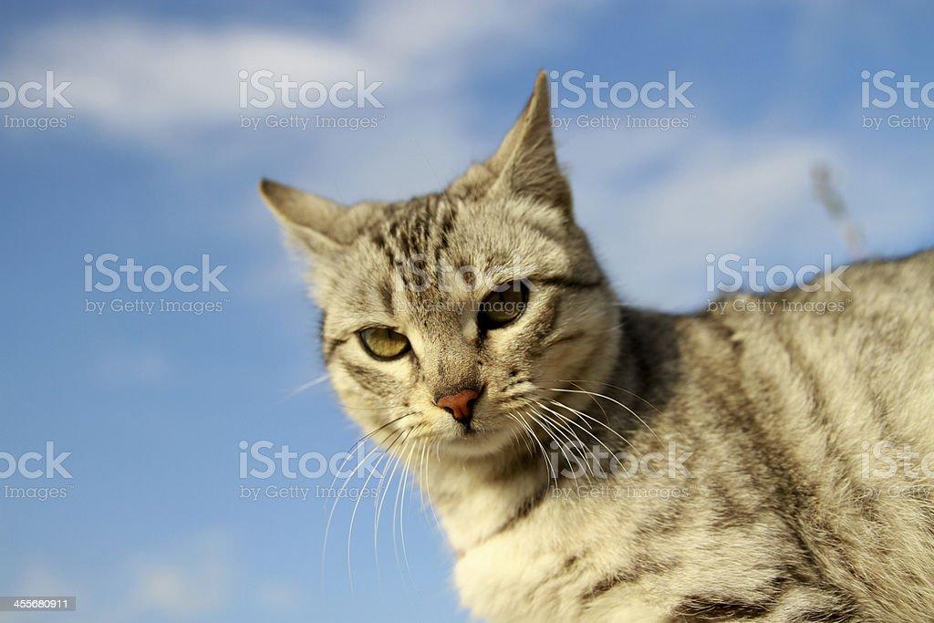 Cat Under Blue Sky royalty-free stock photo
