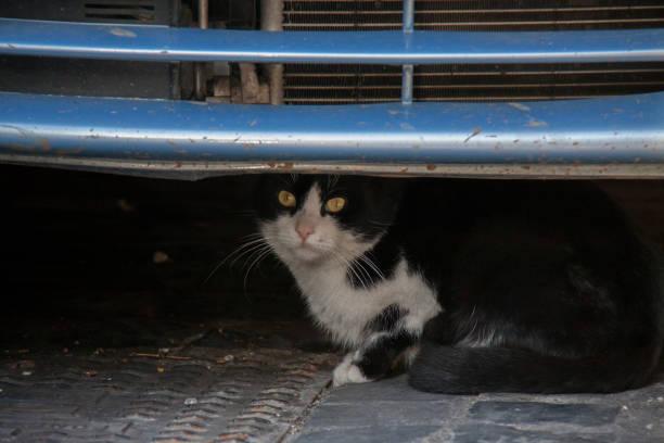 cat under car - batalina cats стоковые фото и изображения
