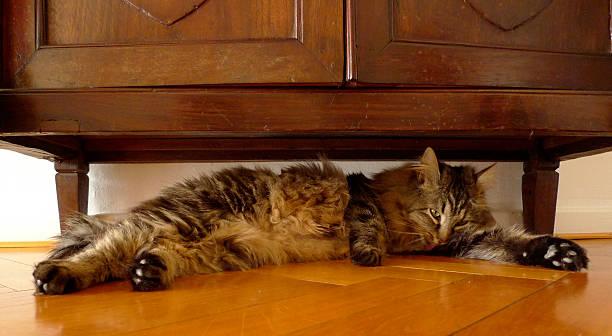 katze unter schrank auf wodden etage - katzenschrank stock-fotos und bilder